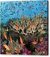 Fiji Reef Riot Acrylic Print