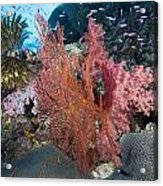 Fiji Sea Fan Scenic Acrylic Print