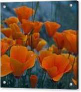 Fill The Frame With Poppies Acrylic Print