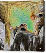 Fillet Of Fish Acrylic Print