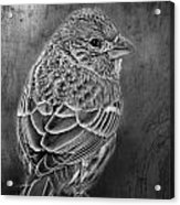 Finch Black And White Acrylic Print