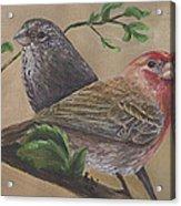 Finch Delights Acrylic Print