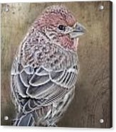 Finch Low Saturation Acrylic Print
