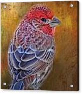 Finch With Gold Texture Acrylic Print