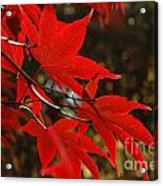 Finer Points Of Red Acrylic Print