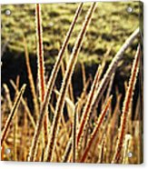 Fingers Of Frost Acrylic Print