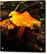 Fire In The Forest - Hygrocybe Cuspidata Acrylic Print