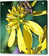 Firefly Fornication 2 Acrylic Print