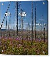 Fireweed  Epilobium Angustifolium Glacier National Park Usa -1 Acrylic Print