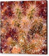 Fireworks Explosion Acrylic Print by Marilyn Sholin