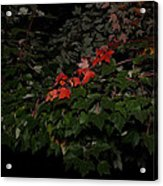 First Fall Colors At Night Acrylic Print