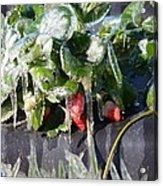 First Freeze Of The Season Acrylic Print