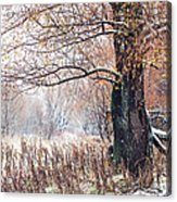 First Snow. Old Tree Acrylic Print by Jenny Rainbow