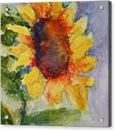 First Sunflower Acrylic Print by Terri Maddin-Miller