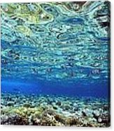 Fish And Coral Underwater Reflected In Acrylic Print
