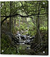Fish Creek Acrylic Print
