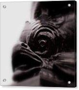 Fish Eye Acrylic Print by Jacqui Collett