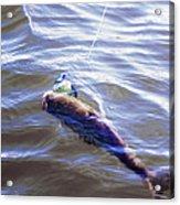 Fish In The Water Acrylic Print
