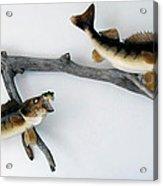 Fish Mount Set 03 A Acrylic Print