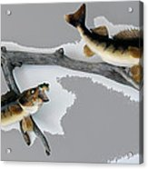 Fish Mount Set 03 C Acrylic Print