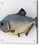Fish Mount Set 04 A Acrylic Print