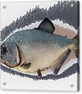 Fish Mount Set 04 C Acrylic Print
