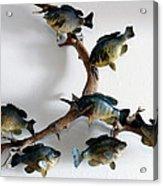 Fish Mount Set 05 A Acrylic Print