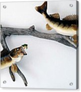 Fish Mount Set 06 A Acrylic Print