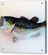 Fish Mount Set 07 A Acrylic Print