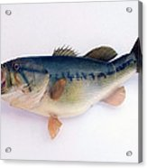 Fish Mount Set 09 A Acrylic Print