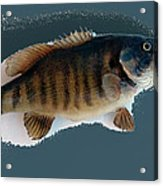 Fish Mount Set 10 B Acrylic Print