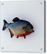 Fish Mount Set 12 A Acrylic Print