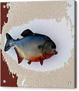 Fish Mount Set 12 C Acrylic Print