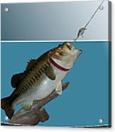 Fish Mount Set 13 D Acrylic Print