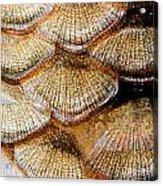 Fish Scales Acrylic Print by Odon Czintos