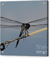 Fishing Bubby Acrylic Print