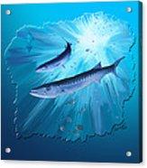 Fishing For Barracuda Acrylic Print