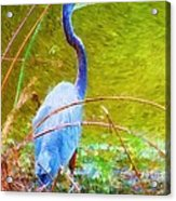 Fishing In The Reeds Acrylic Print