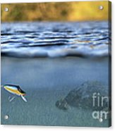 Fishing Lure In Use Acrylic Print