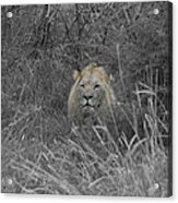 Fit For A King Acrylic Print