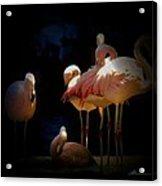 Flamingo 2 Acrylic Print
