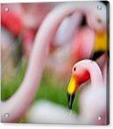 Flamingo 4 Acrylic Print
