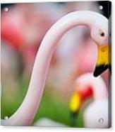Flamingo 5 Acrylic Print