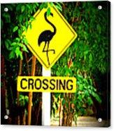 Flamingo Crossing Acrylic Print