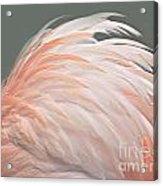 Flamingo Feather Details Acrylic Print