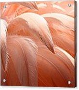 Flamingo Feathers Acrylic Print