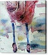 Flamingo Mist Acrylic Print