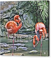 Flamingos Img 2897 Acrylic Print
