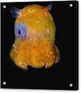 Flapjack Octopus Acrylic Print