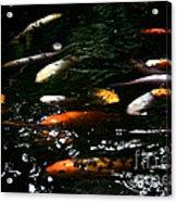 Flash Mob Koi Acrylic Print